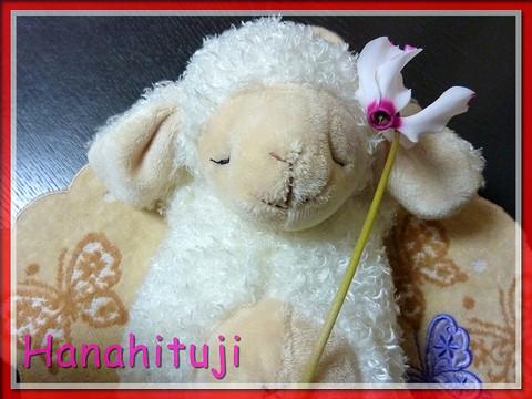 Hanahituji_1