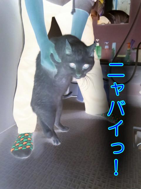 Chiro2