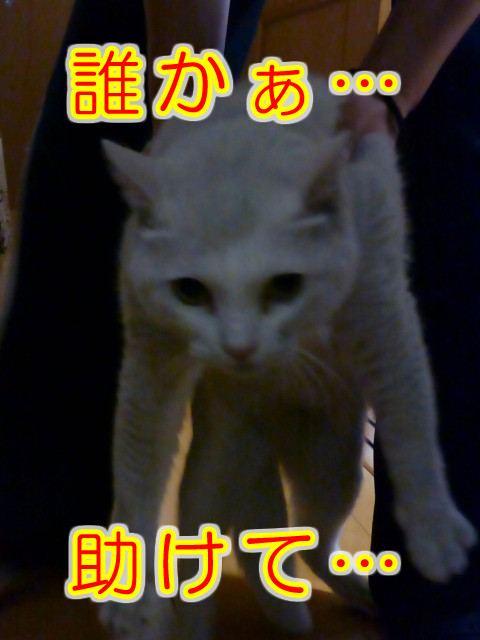 Chiro3