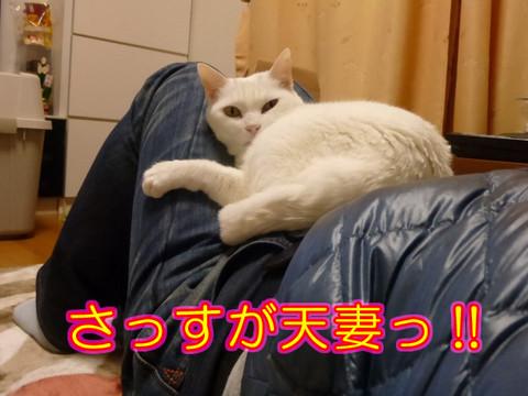 Tensai